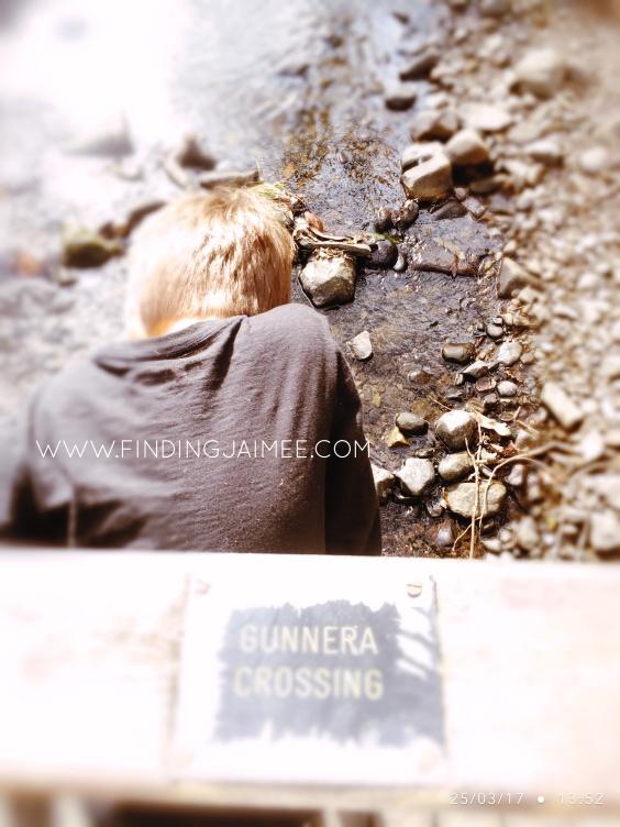 Gunnera Crossing